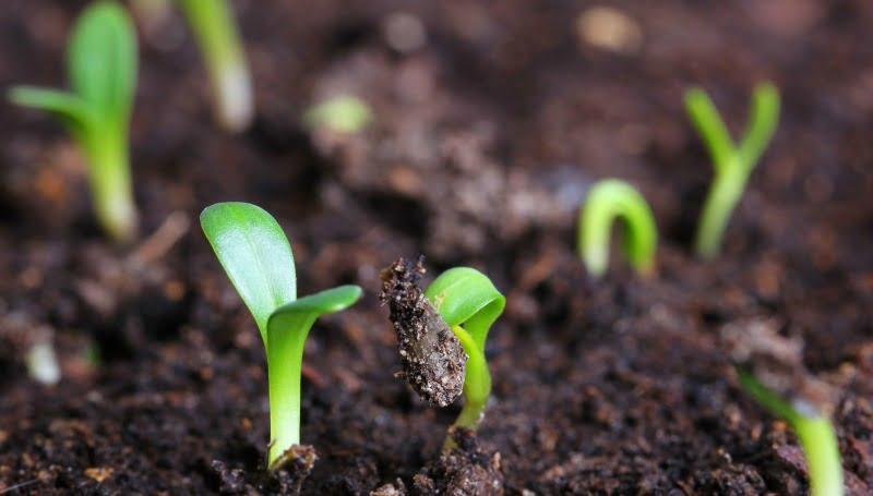 agricultura terra Vida Rural
