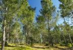 Portugal e Espanha lançam projeto para a recuperação da floresta depois dos incêndios