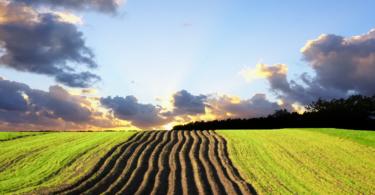 agricultura Vida Rural