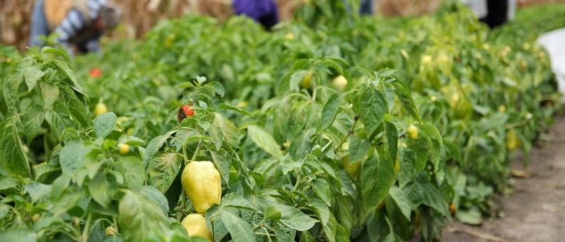 PAN critica estratégia do Governo para a agricultura