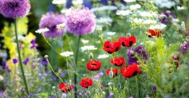 flores Vida Rural