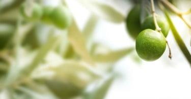 PAN quer suspensão de colheita mecanizada de azeitona durante a noite
