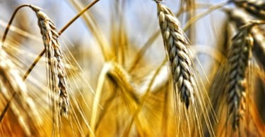 Associação Nacional de Produtores de Cereais