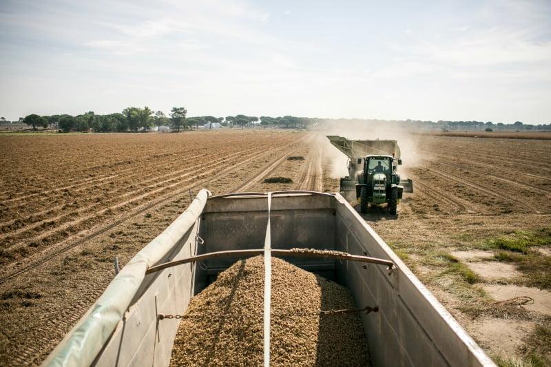 Amendoim Vida Rural