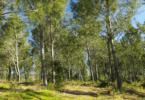 reforma da floresta