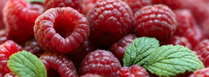 exportações de frutos vermelhos