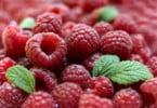 pequenos frutos