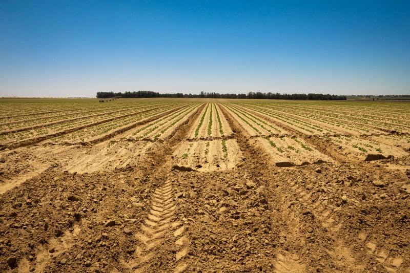 agricultura do Iraque