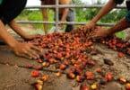 utilização de óleo de palma na produção de biocombustíveis