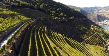 Especial Viticultura Sustentável Vida Rural