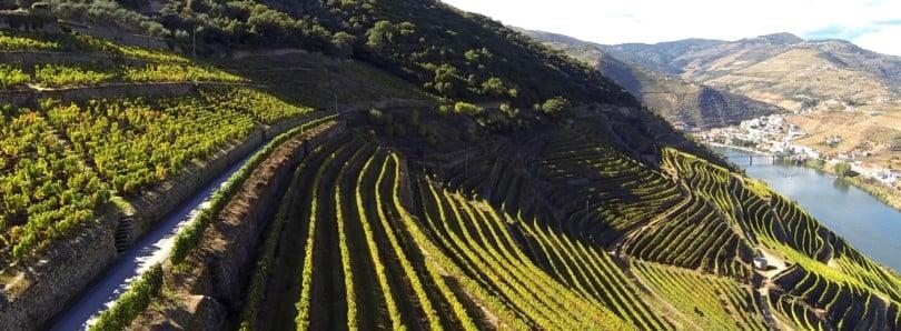 Especial Viticultura Sustentável - Vida Rural