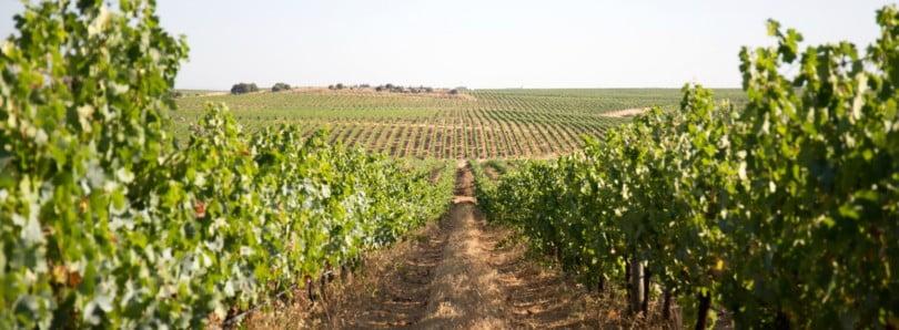 Especial Viticultura Sustentável