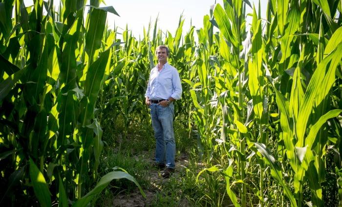 José Palha, presidente da Associação Nacional de Produtores de Cereais, Oleaginosas e Proteaginosas (ANPOC)