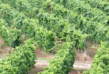 vinhos do Monte da ravaqueira
