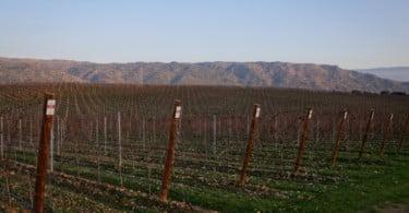 Symington Viticultura Sustentável Vida Rural