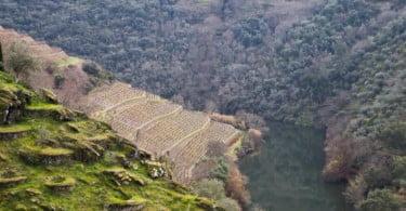 The Fladgate Partnership Vida Rural