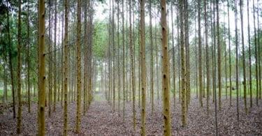 boas práticas florestais