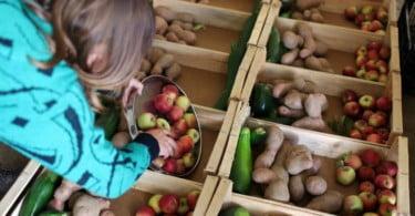 combate ao desperdício alimentar