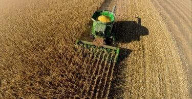 milho - colheita