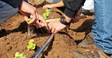 24H Agricultura Syngenta realiza a sua segunda edição