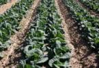 proudção hortícolas Vida Rural