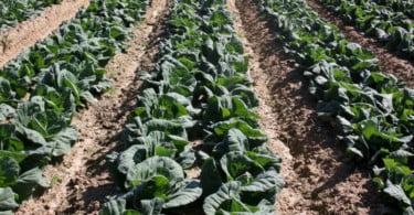 proudção hortícolas - Vida Rural