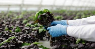 tecnologia na agricultura - Vida Rural