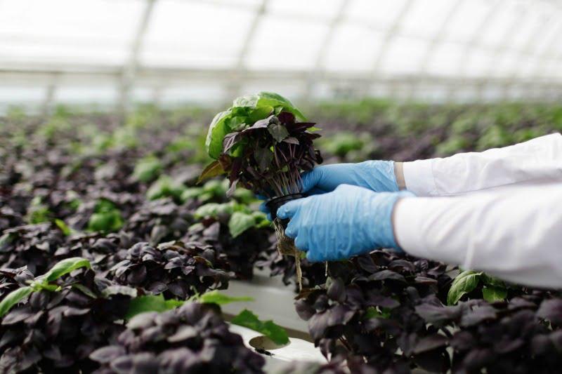 Bosch aposta na 'agricultura inteligente'