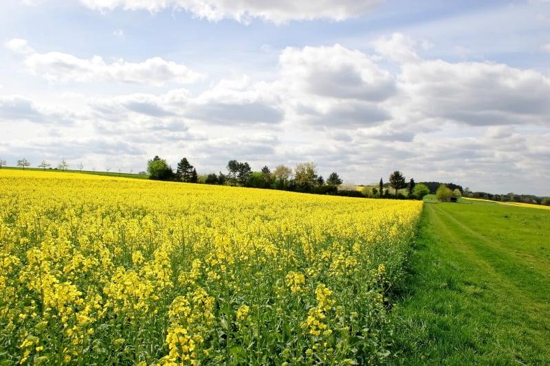 Comissão Europeia publica orientações para a venda de terrenos agrícolas
