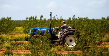 Fairfruit - João Serrano  - Vida Rural