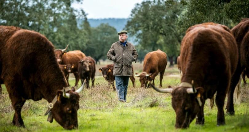 Joaquim Capoulas Monfurado pecuária extensiva Vida Rural