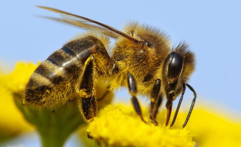Incêndios preocupam apicultores portugueses