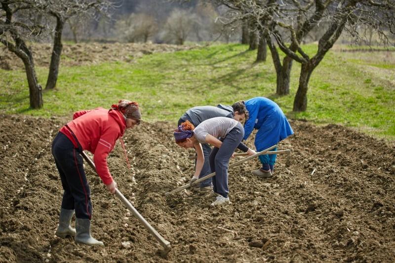Já pode pedir o estatuto de agricultura familiar online