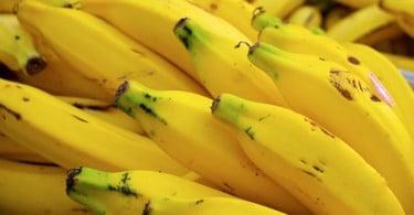 Fungo coloca produção mundial de banana em risco
