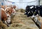 Carne de bovino nacional já pode ser exportada para a Arábia Saudita