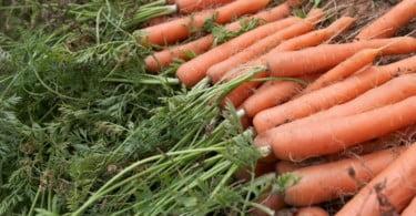 Acordo internacional de valorização da agricultura familiar na CPLP assina-se na próxima semana