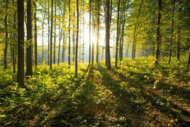 Associações ambientalistas denunciam desinvestimento na conservação da natureza