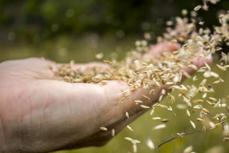 sementes - Vida Rural