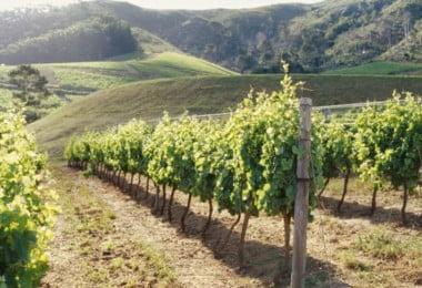 Vinhos da Península Ibérica em perigo por causa das alterações climáticas