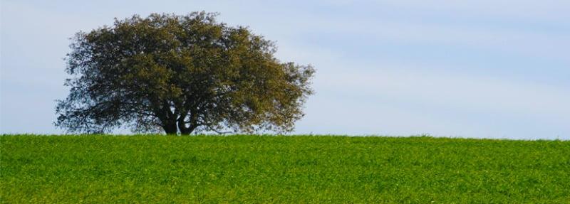 Castro Verde classificado como Reserva da Biosfera da Unesco