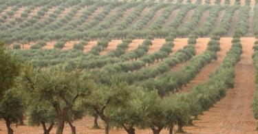 Processos de degradação do solo: medidas de prevenção