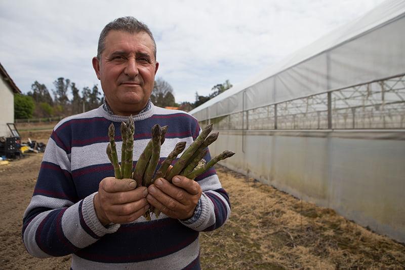 António Ferreira aceitou o desafio da cooperativa para produzir espargos