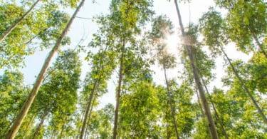 Reforma da Floresta em stand-by até novembro