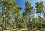 Proprietários rurais contra alargamento de Zona de Proteção Especial do Tejo