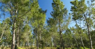 Programas de ordenamento florestal entram em discussão pública