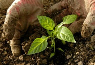 hortas urbanas promovem bem-estar físico e mental da população