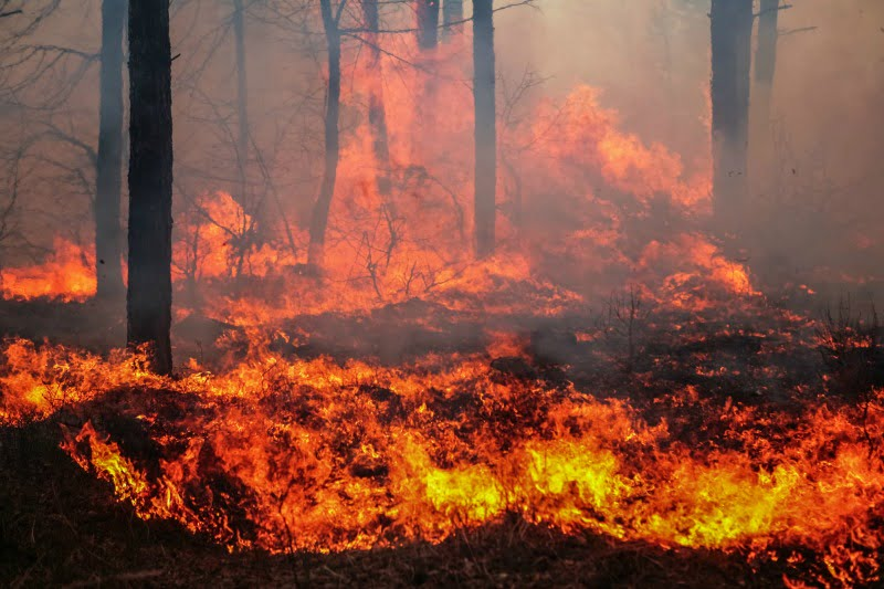 Já estão disponíveis apoios para os agricultores afetados pelos incêndios da região centro