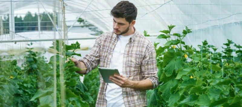 Prazo de candidaturas a apoios para jovens agricultores a terminar