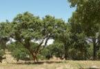Papel dos microrganismos do solo na recuperação de solos degradados