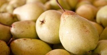 O Instituto Superior de Agronomia (ISA), da Universidade de Lisboa, pulicou um conjunto de recomendações para armazenar pera Rocha e para garantir a qualidade sensorial do fruto
